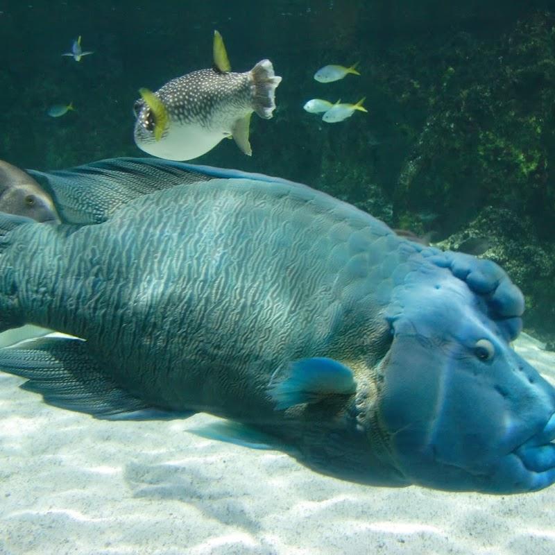 Aquarium_24.jpg