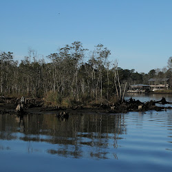 Fowl Marsh from Boat Feb3 2013 056