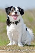 Huisdierfotografie - Huisdierreportage Hond (4 juni 2011) - 2