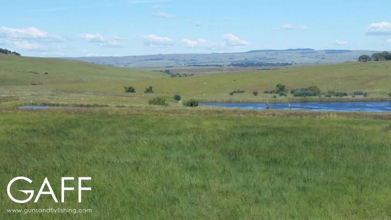 hunting-highveld-africa-dullstroom-blesbuck-blackwildebeest (10).jpg