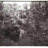 n029-019-1966-tabor-sikfokut.jpg