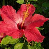 Gardening 2011 - 115_0447.JPG