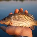 20140612_Fishing_BasivKut_004.jpg