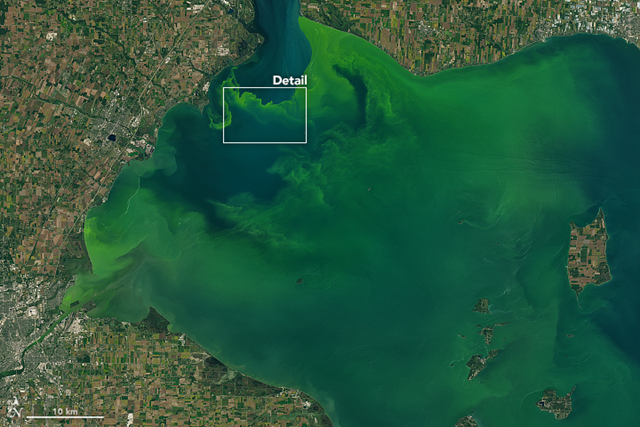 On 26 September 2017, the Operational Land Imager (OLI) on the Landsat 8 satellite captured this natural-color images of a large phytoplankton bloom in western Lake Erie. According to the National Oceanic and Atmospheric Administration, the bloom contains microcystis, a type of freshwater cyanobacteria. These phytoplankton produce toxins that can contaminate drinking water and pose a risk to human and animal health (skin irritant, respiratory distress) when there is direct contact. Photo: Joshua Stevens / NASA Earth Observatory