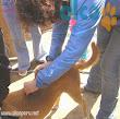 2da asistencia a Pisco por terremoto 2007 (22)