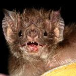 Vampiro 1.jpg