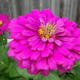 Gardening 2012 - 115_2108.JPG