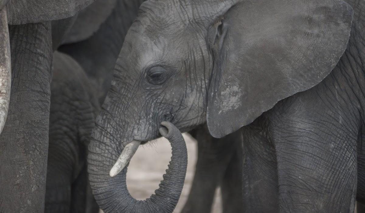 TanzaniaDSC04293.jpg