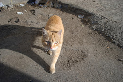 A cat in Willets Point greets the sun on an early February morning.