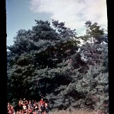 dia060-028-1965-tabor-bakony-ii.jpg