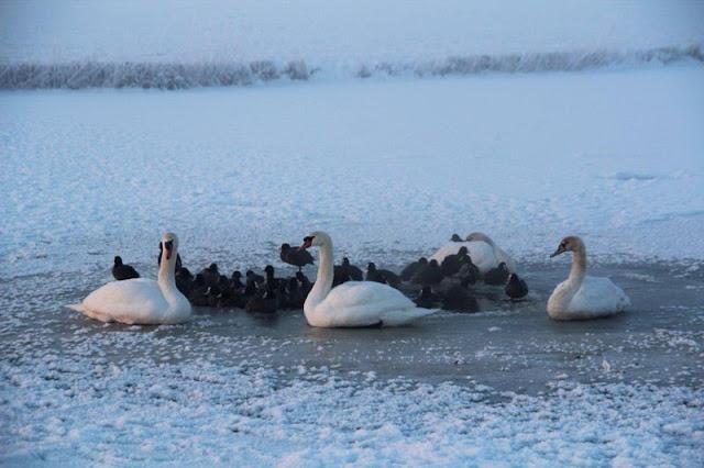 Winterkiekjes Servicetv - Ingezonden%2Bwinterfoto%2527s%2B2011-2012_79.jpg