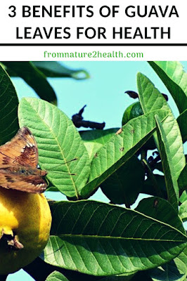 Guava Leave for Diabetes, Guava Leave for Health