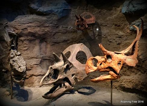 Dinosaur skulls