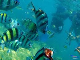pulau harapan, 5-6 september 2015 skc 010
