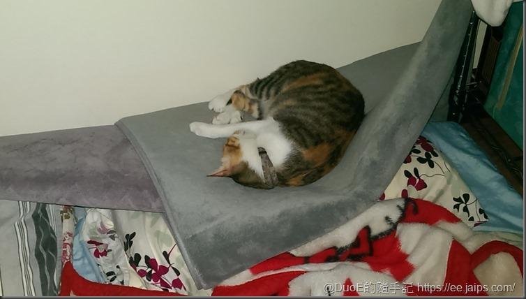 MoMo睡覺趣-1