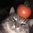 Kieran Paling avatar image