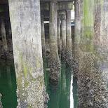 harbor dock poles at Granville Island in Vancouver, British Columbia, Canada