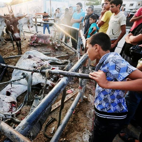 Palestinians look at donkeys killed and wounded, by an Israeli strike earlier, at the adjacent Abu Hussein U.N. school, seen in background, in Jebaliya refugee camp, northern Gaza Strip, Wednesday, July 30, 2014.