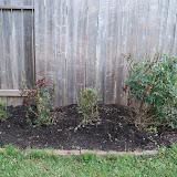 Gardening 2011 - 100_6637.JPG