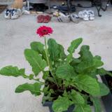 Gardening 2010, Part Two - 101_2810.JPG