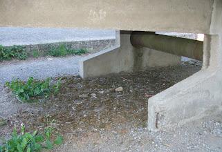 Photo: tohle bydlí pod ping-pongovým stolem