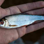 20150816_Fishing_Ostrivsk_130.jpg