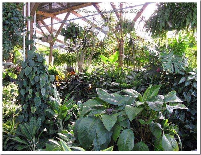 05-08-foliage-plants