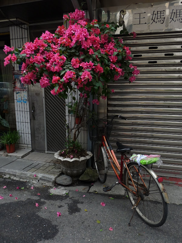 TAIWAN . Taipei De Shandao Temple jusqu à T 101 à pied... - P1160299.JPG