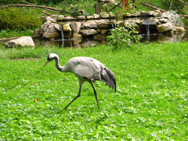 Warszawskie zoo - img_6389.jpg