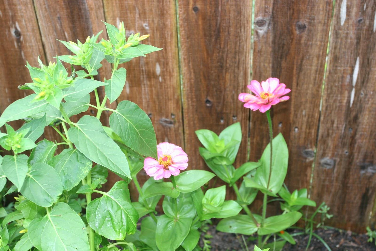 Gardening 2012 - IMG_3524.JPG
