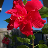 Gardening 2015 - 100_0512.JPG