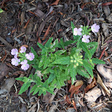 Gardening 2010, Part Two - 101_3147.JPG
