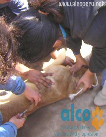 2da asistencia a Pisco por terremoto 2007 (20)