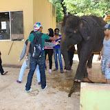 A Memorable Trip to Elephant Sanctuary