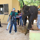 A Memorable Trip to Elephant Sanctuary