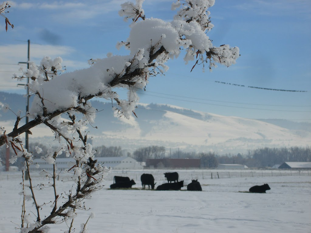 Black Angus at the entry to the Missoula College - Target Range Neighborhood