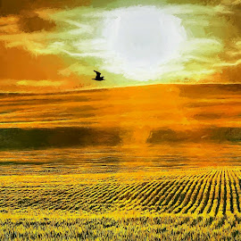Wheat field sundown by Gaylord Mink - Digital Art Places ( landscapes, sun down, field, bird )