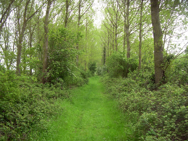 Wooded path along the north bank