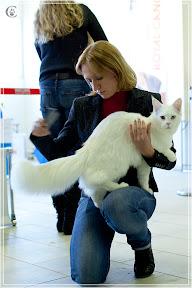 cats-show-25-03-2012-fife-spb-www.coonplanet.ru-009.jpg