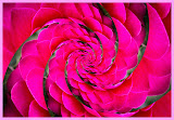 """""""Red Flower Swirl"""" - 1st Place A Special"""