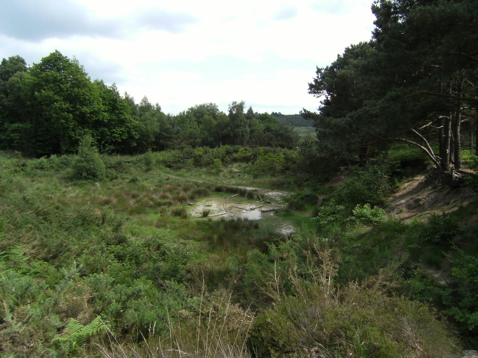 1006120051 Roo's Sandy Pit, Ashdown Forest