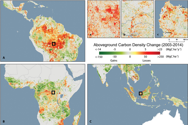 Geography of carbon density change. The figure depicts the spatial distribution of areas exhibiting gains, losses, and no change (stable) for the period 2003-2014 within each grid cell (ca. 500 x 500 m). Graphic: Baccini, et al., 2017 / Science