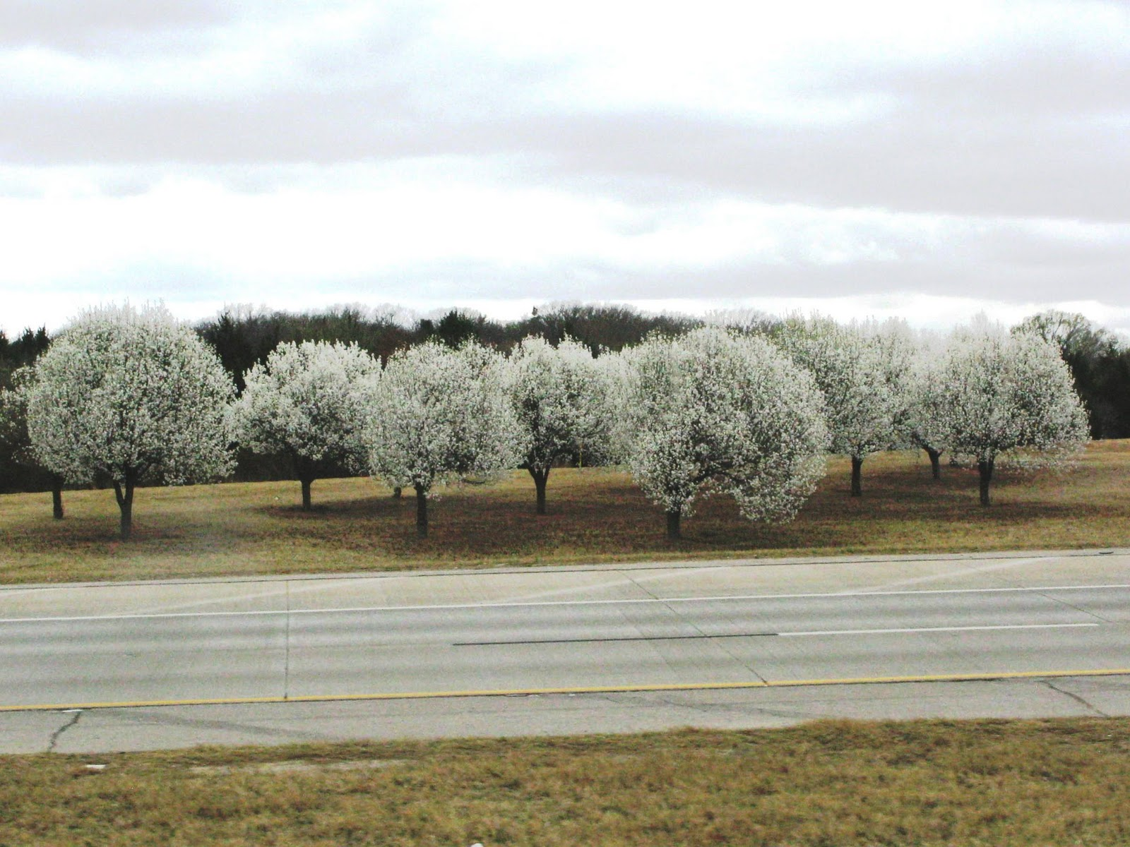 From Snow In Mo Yesterday Morning To White And Purple Flowering Trees Branches Covered With Tiny Unfurling Leaves Expansive Green Pastures Oklahoma
