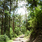 The tall wooded forest near the STEP track (394178)