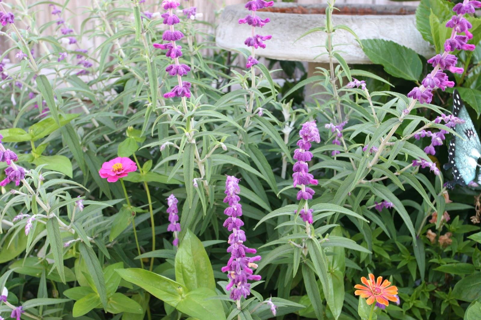 Gardening 2012 - IMG_3105.JPG