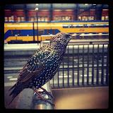 Bezoeker van Holland Spoor, Den Haag
