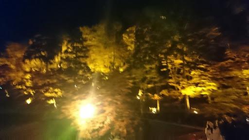 DSC 7644 thumb%255B2%255D - 【Vaperの休日】香嵐渓で秋の紅葉夜景を見てきてイノシシやシカ、刀削麺を食らう!それから車の試乗行ってきた【グルメレポート/マツダ CX-5】
