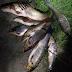 Порибалив на 2000 грн штрафу: Закарпатець незаконно ловив червонокнижну рибу (ФОТО)
