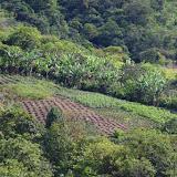 Polyculture vivrière. Las Juntas, 1250 m (Carchi, Équateur), 4 décembre 2013. Photo : J.-M. Gayman