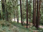 Trails behind Harvey West Park